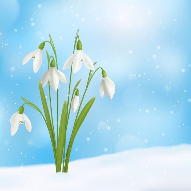 Реалистичная композиция из подснежников и снега с букетом цветов, выросшим на поверхности снега с изображением неба снежинок Бесплатные векторы