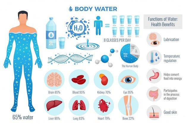体と水セット水機能、フラット分離ベクトル図 無料ベクター