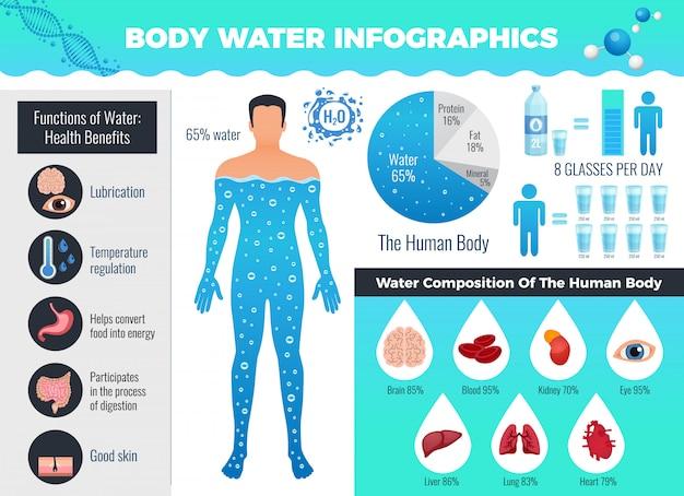 水バランス、フラットベクトルイラスト入り体と水のインフォグラフィック 無料ベクター