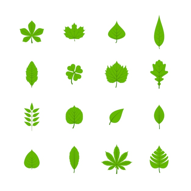 Зеленые деревья листья плоские иконки набор из дуба осина липа клен каштан клевера растений изолированных векторных иллюстраций Бесплатные векторы