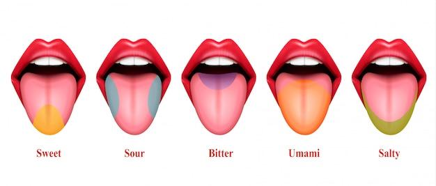 Реалистичные иллюстрации вкусовых оттенков языка с пятью основными частями вкуса: сладкий, соленый, кислый и горький Бесплатные векторы