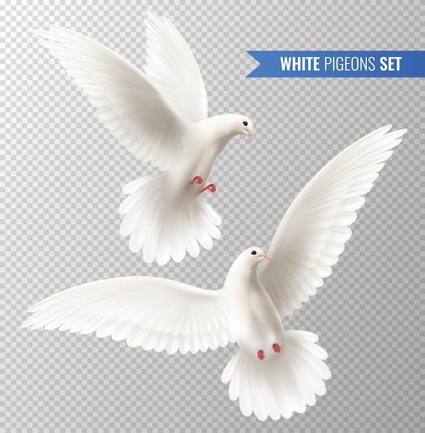 Набор белых голубей Бесплатные векторы