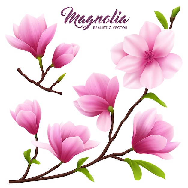 Розовый реалистичный цветок магнолии набор цветов на ветке с листьями красивыми и милыми Бесплатные векторы