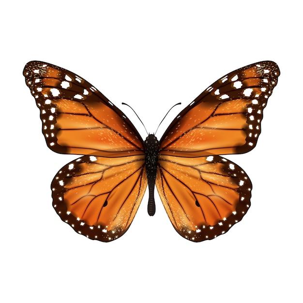 蝶の現実的な孤立した 無料ベクター