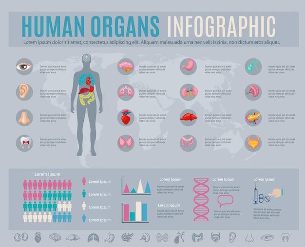 内部の身体部分のシンボルとチャートを持つ人間の器官のインフォグラフィックセット 無料ベクター