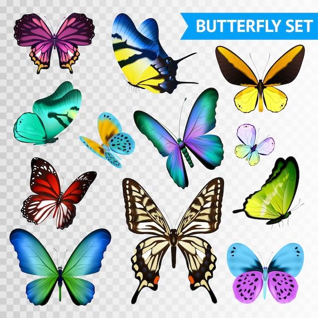 Маленькие и большие разноцветные бабочки набор изолированных на прозрачном фоне Бесплатные векторы