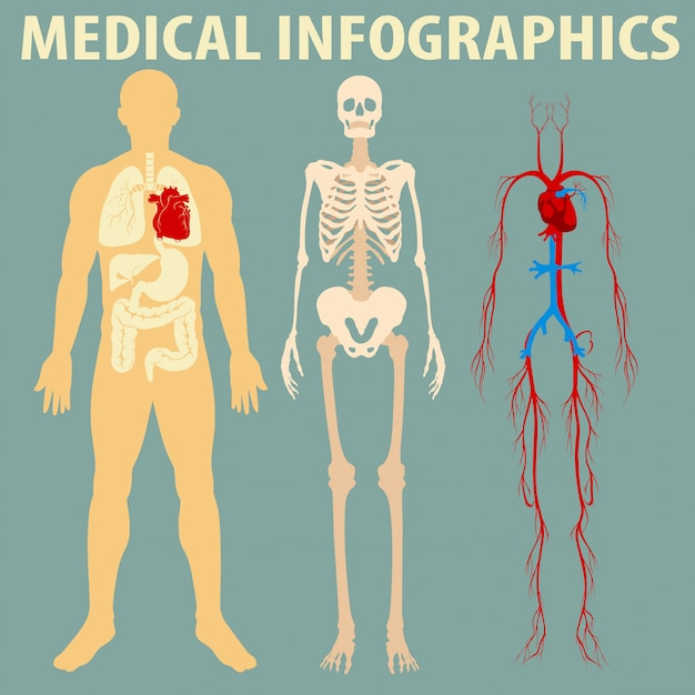 人体医療インフォグラフィック 無料ベクター