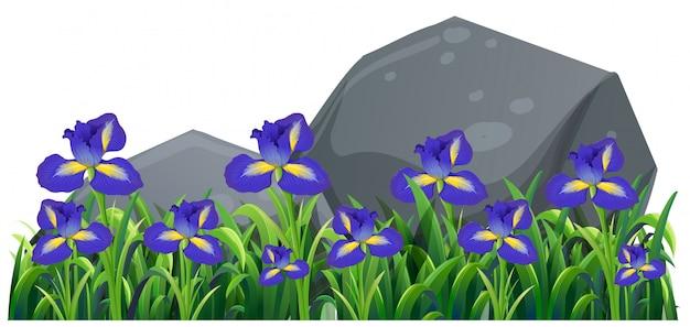 庭の紫色のイルカの花 無料ベクター