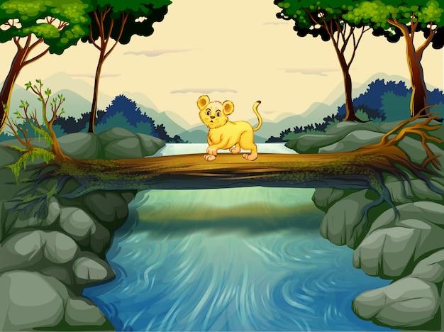 川を渡る若い虎 Premiumベクター