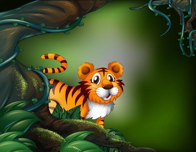 虎と熱帯雨林 Premiumベクター