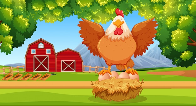 農地での雌鶏 Premiumベクター
