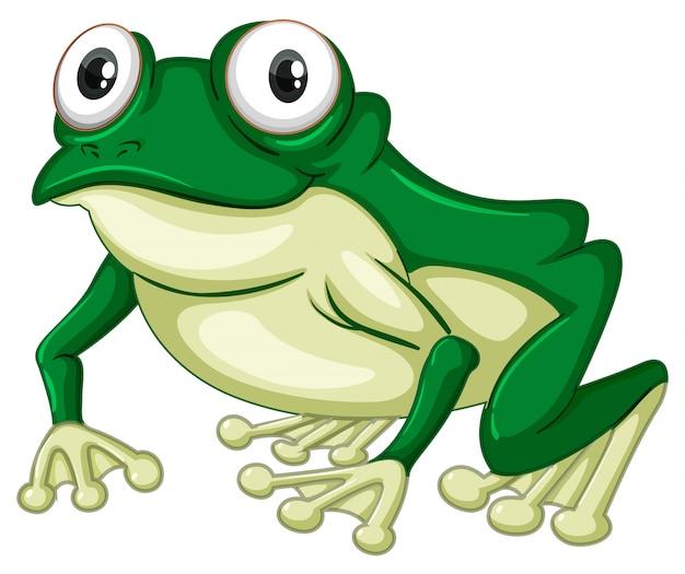 白い背景の上の緑のカエル 無料ベクター