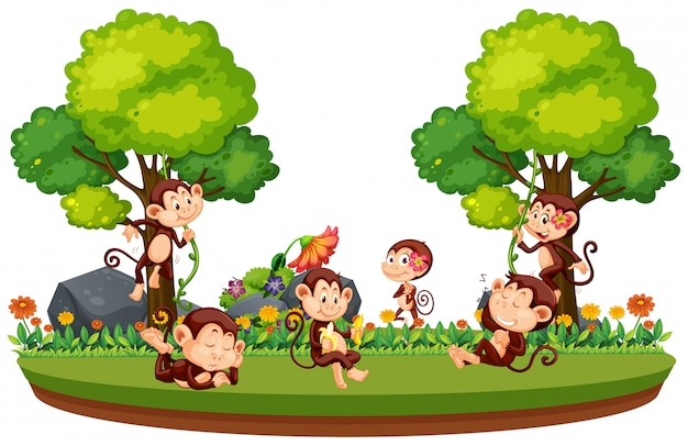 フォレスト内の野生の猿 Premiumベクター