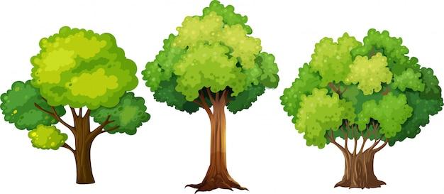 別の木のデザインのセット 無料ベクター