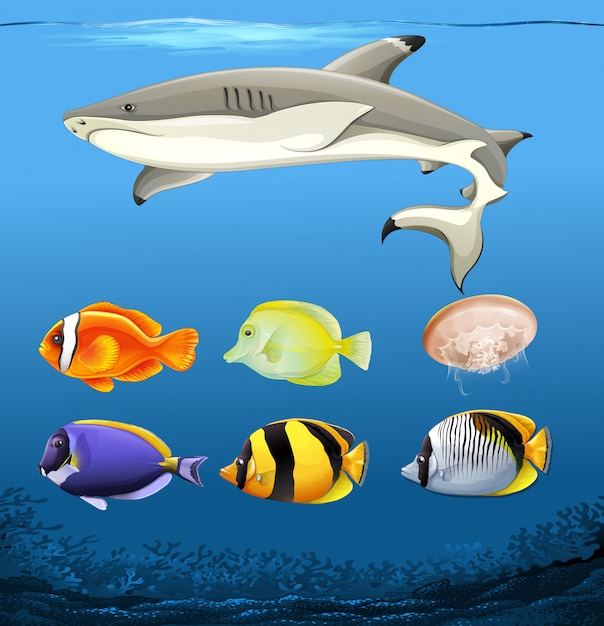 Набор подводных рыб Бесплатные векторы