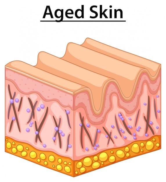 高齢者の肌の図を閉じる 無料ベクター