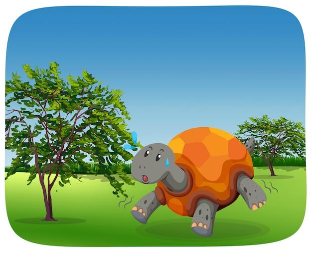 Бегущая черепаха на природе Premium векторы