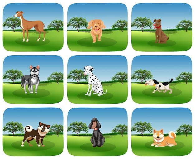 自然の中で犬の品種のセット 無料ベクター