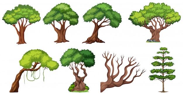 Набор разного дерева Бесплатные векторы