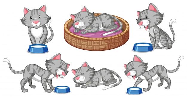 猫キャラクターのセット 無料ベクター
