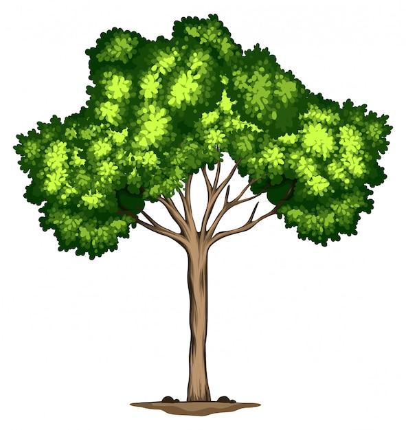 白い背景の上の木のデザイン 無料ベクター