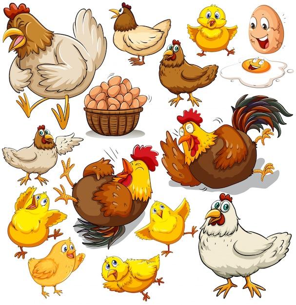 Иллюстрация куриных и свежих яиц Бесплатные векторы