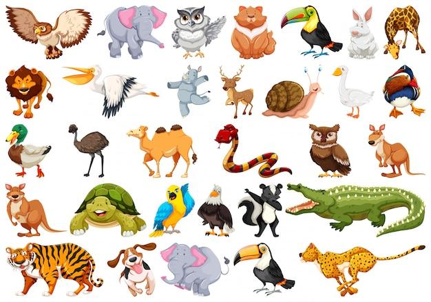 Набор символов животных Бесплатные векторы