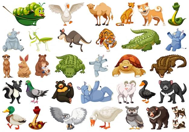 野生動物イラストのセット 無料ベクター