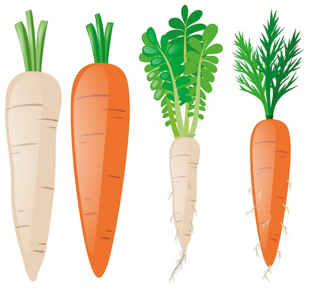 Морковь в разных формах Бесплатные векторы