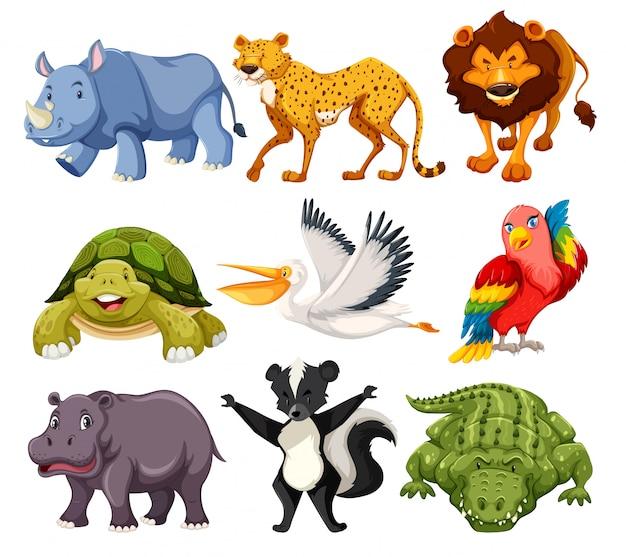 Набор животных в упаковке Бесплатные векторы