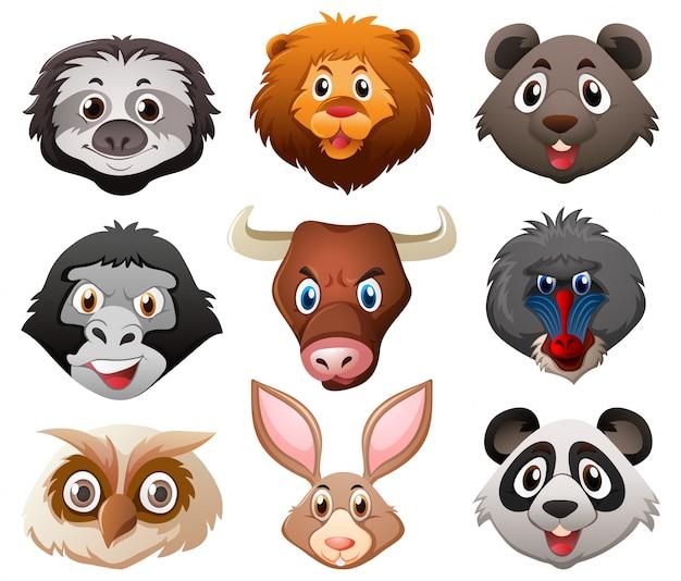 Лица диких животных Бесплатные векторы