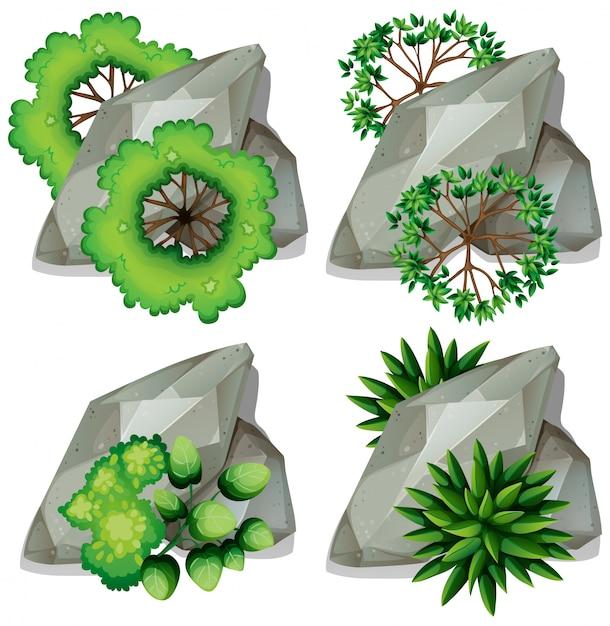 自然の岩と植物のセット 無料ベクター