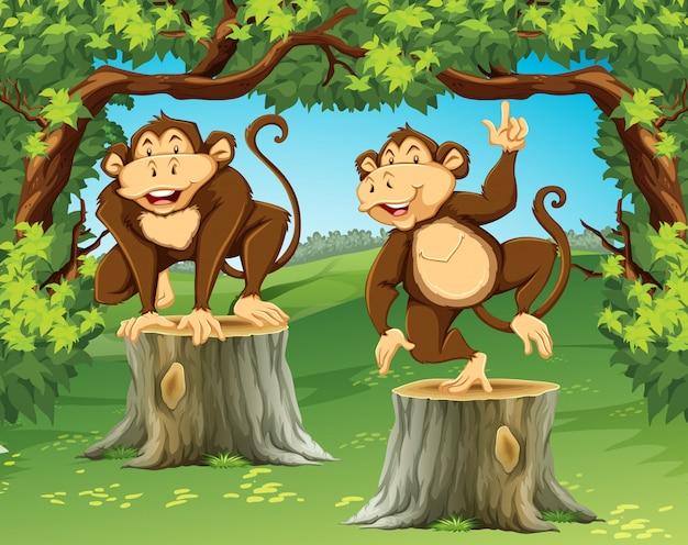 Две обезьяны в джунглях Бесплатные векторы