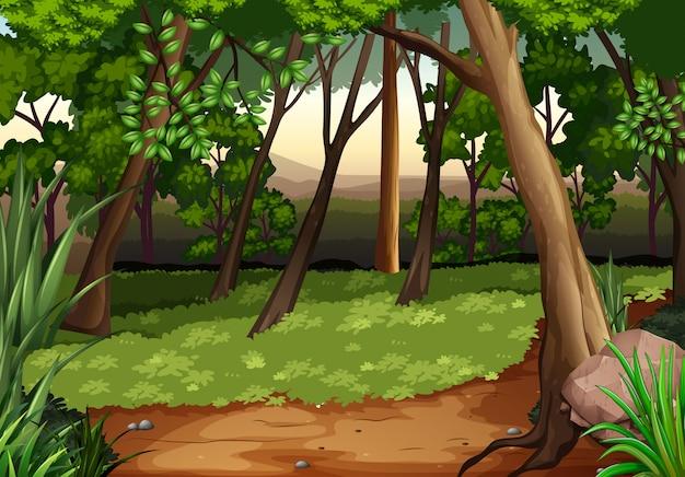 木々や森の中のフィールドのシーン Premiumベクター