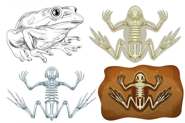 蛙と地下の化石 無料ベクター