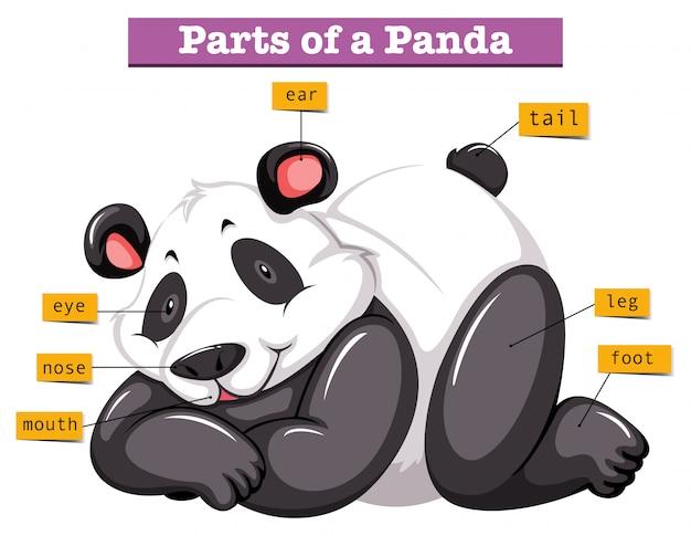 パンダと体のさまざまな部分 無料ベクター