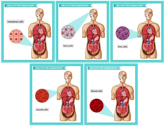 Научная медицина, типы клеток Premium векторы