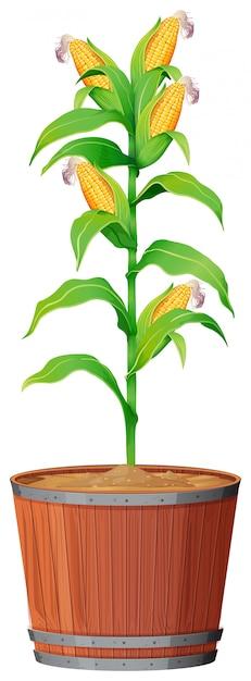 孤立した白地に緑の葉と鉢植え Premiumベクター