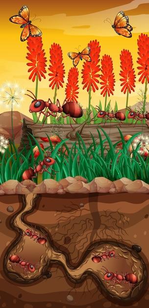 Природа с бабочками и муравьями в саду Бесплатные векторы