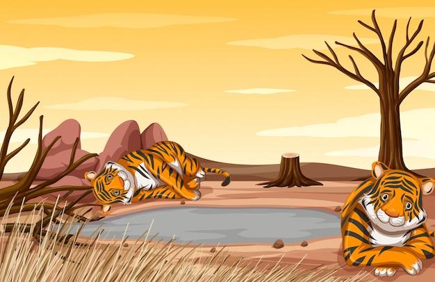 Загрязнение сцены с грустными тиграми на поле Бесплатные векторы