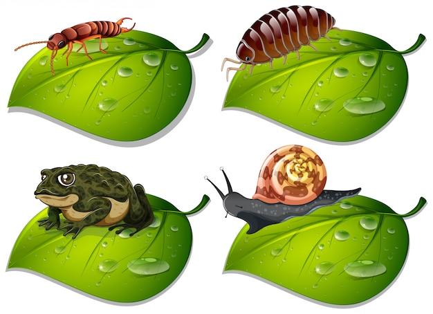 Четыре вида насекомых на зеленых листьях Бесплатные векторы