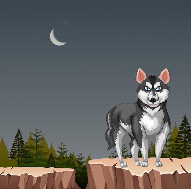 夜の崖の上のハスキーオオカミ犬 無料ベクター