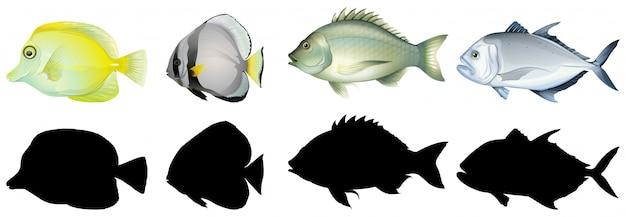 Силуэт, цвет и контурная версия рыбы Бесплатные векторы