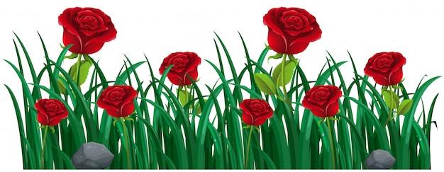 Красные розы в кустах Бесплатные векторы