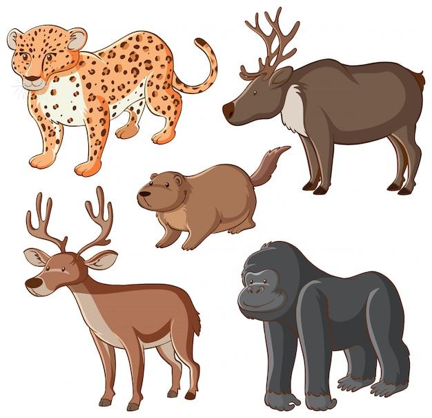 Изолированные дикие животные Бесплатные векторы