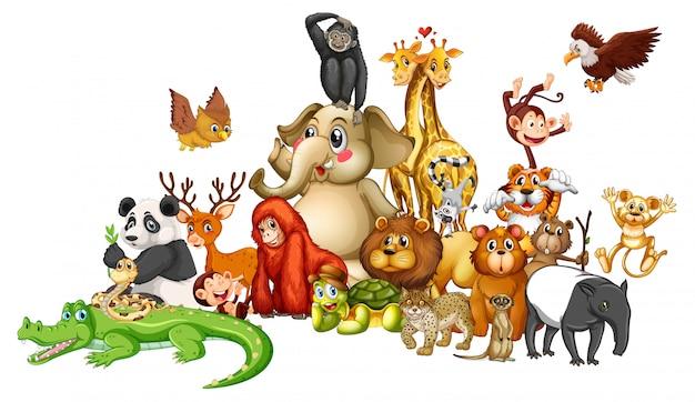 Многие животные на белом Бесплатные векторы