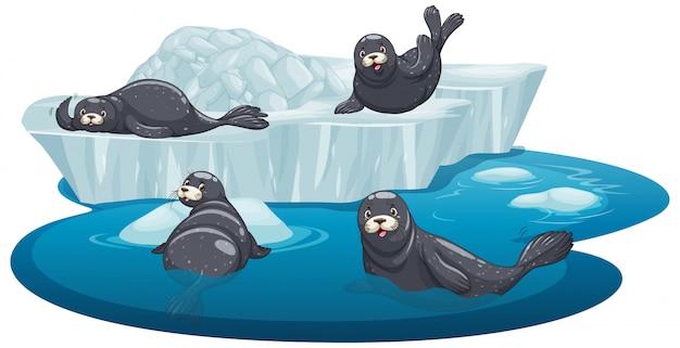 氷の上の孤立したシール 無料ベクター