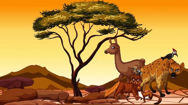 砂漠にたくさんの動物がいるシーン Premiumベクター