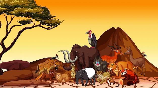 サバンナ畑の動物とのシーン 無料ベクター