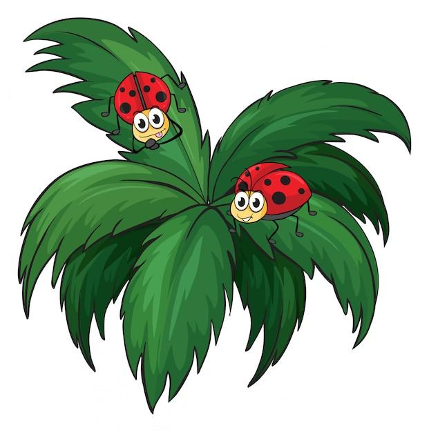 Растение с двумя божьими коровками Бесплатные векторы